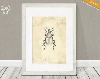 Beetle   Print art   Wall art   Hand drawn   Bug   Original artwork   Printable insect   Room decoration, vintage shabby, science books