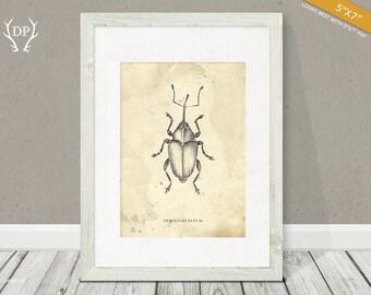 Beetle   Print art   Wall art   Pencil drawing   Bug   Original artwork   Printable insect   Room decoration, vintage shabby, science books