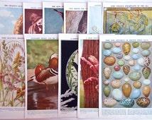 Pack of Vintage Book Plates / Prints for Framing, Crafts, Art Journals, Collage, Scrapbooking, Card Making