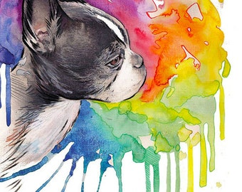 Boston Terrier Portrait ,  custom portrait