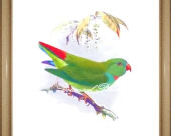 "Bird Print. Parrot Print. Bird picture. 8x10"" 11x14"""