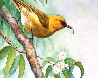 Hawaiian bird 'Akiapola'au  print of watercolor 11 X 13""