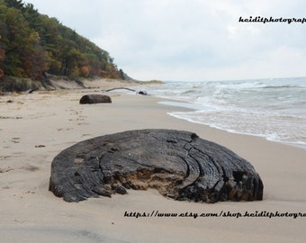 Beach Stump~  **Lake Michigan**Hoffmaster State Park**Muskegon**Tree Stump**October**