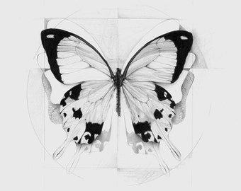 Original and Limited Edition Print of 200, signed and numbered by hand - Butterfly