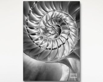 Nautilus Shell Art Canvas Print, Black White Photo, Hotel Room Wall Art