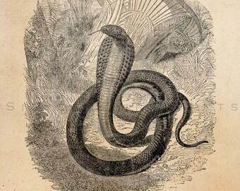 popular items for snake animal on etsy Leopard Print Alphabet Letters Cheetah Print