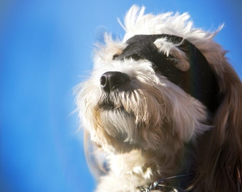 caped Crusader dog photography print