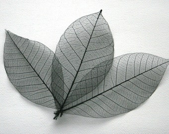 Black Skeleton Leaves
