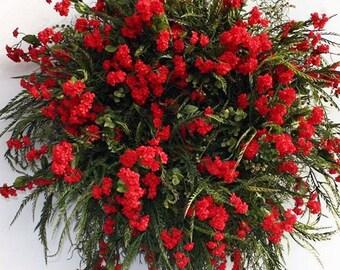 Babys Breath Red Flower Seeds (Gypsophila Elegans Crimson) 100+Seeds