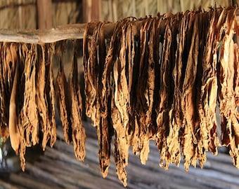 GROW & ROLL Tobacco Seeds (Nicotiana Hiltonia) 200+Seeds