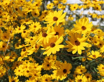 Flowers at Cypress Gardens near Charleston, SC! Digital Download Photography