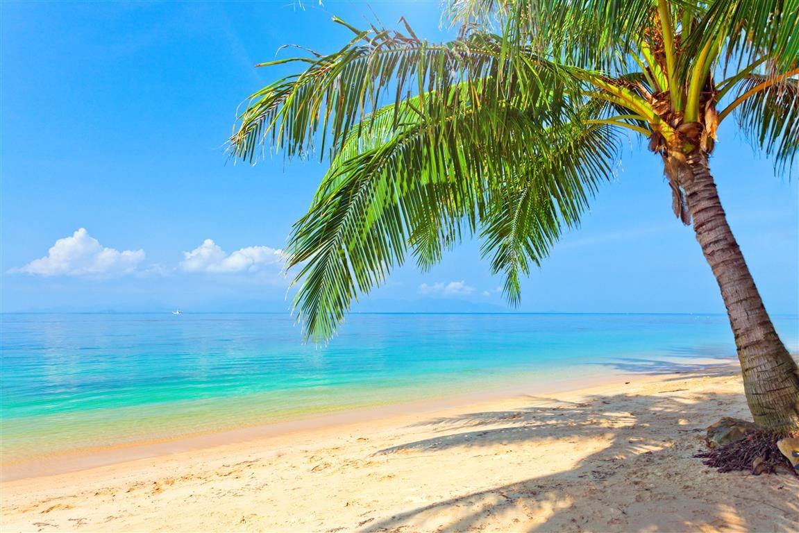 tropical beach wallpaper 120 - photo #30