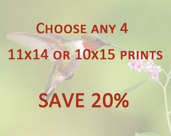 DISCOUNT PRINT SET - Any 4 11x14 or 10x15 Prints - Save 20%