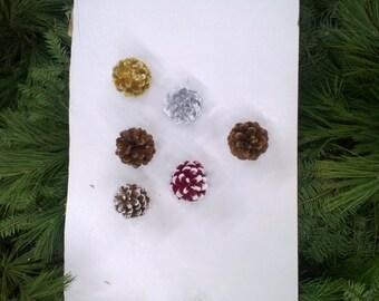 Austrian Pine Cones