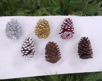 Slash Pine Cones