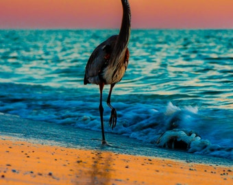 Heron Sunset on Beach in Gulf of Mexico