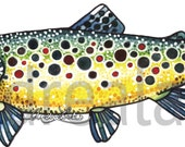 Watercolor Brown Trout Laminated 3M Decal