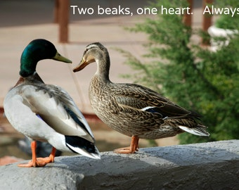 Two Beaks  -- set of 3 greeting cards -- 5x7 -- with envelope -- inside blank