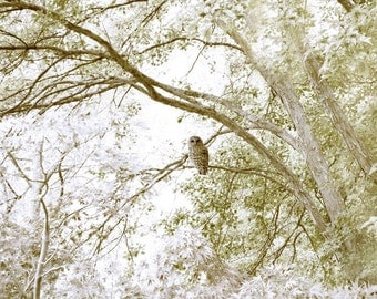 Barred Owl Dreamy Landscape Photography Woodland Nursery Decor Art Print