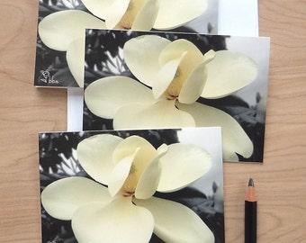 magnolia photo cards, flower cards, white flowers notecard set, botanical stationery, nature art print card