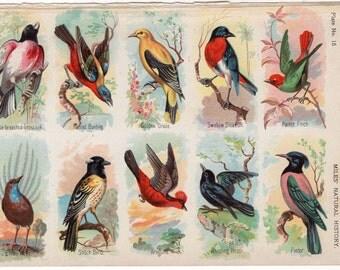 1895 exotic bird print assortment of birds original antique exotic ornithology lithograph