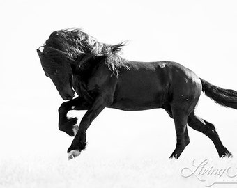 The Friesian's Leap - Fine Art Horse Photograph - Horse - Friesian - Fine Art Print
