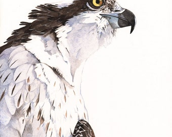 Osprey Watercolor painting Bird art  Print of watercolor A3 size wall art print - bird art print