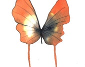 """orange, black yellow and white butterfly 8 X 10"""" original watercolour painting"""