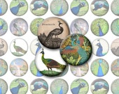 Peacock Bottlecap Images V1 / Peacocks, Feathers, Vintage Bird Motif / Printable Digital Collage for 1-Inch Circles / Instant Download