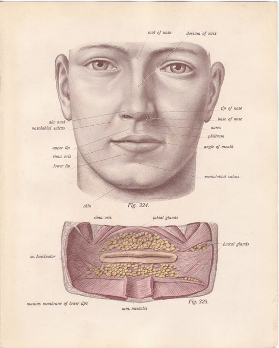 Antique Medical Page Diagram Human Face Mouth Lips Eyes 1911