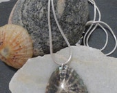 Large Limpet Shell Necklace
