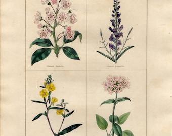 1836 Antique Botanical Print - Kalmia, Purple Flax-Weed, Dwarf Oenothera, Valerian, Benjamin Maund, Original Handcolouring, Floral Wall Art