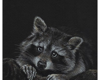 Original Raccoon Drawing, Raccoon Prismacolor Pencil Art, 8 x 10 Mat Board, Wildlife Drawing, Animal Art, SFA, Small Format Art, ADA-394OA