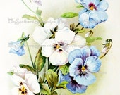 White and Blue Pansies Instant Download Catherine Klein Digital File  Scrap booking