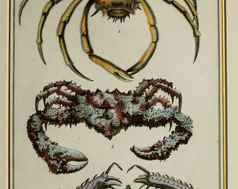 1780 Antique print of CRABS, CRUSTACEANS. Sea Life. Marine Animals. Natural History. 237 years old engraving