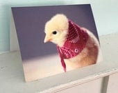 Greeting Card Chicks in Hats Photo Card Chicken Wearing A Miniature Red Kerchief Baby Animals #58