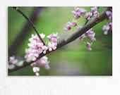 Dreamy Pink Tree Blossoms Photo Print