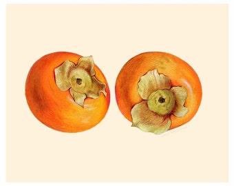 Persimmon Pair // Food Illustration // Print of Original Illustration, Watercolor, Kitchen, Realistic Art