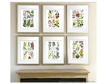 Wedding Gift idea, Wild Flowers Botanical Print Set of 6 Botanical Prints English Wild Flowers, Pastel Room Above Mantel wall Art Botany
