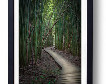 Road to Hana Maui Hawaii Bamboo Forest Fine Art Photography Relax Haleakala National Park Amanda Lackides Photography Wall Art Print Decor