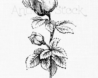 Flower Clip Art Image 'Two Roses' Vintage French Illustration Digital Download for Altered Art, Crafts, Iron on Transfers...