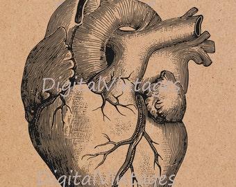 Anatomic Heart Illustration Vintage Antique Digital Image Graphic Download Printable Graphic Clip Art for Transfers  Prints HQ 300dpi
