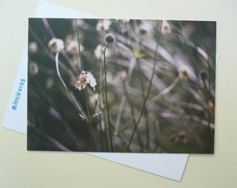Photo postcard from minnievoss, sea pink, analog photography, offset printing, flower, blossom, fly