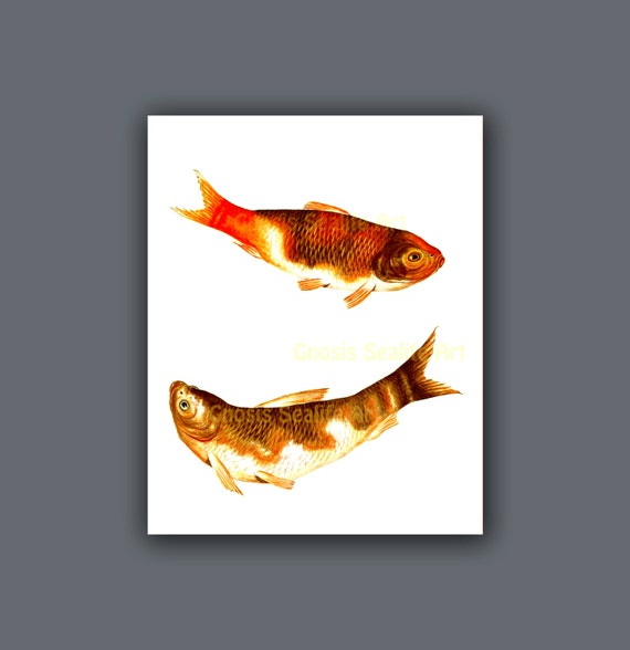 Items similar to vintage fish art koi fish wall art print for Koi fish wall decor