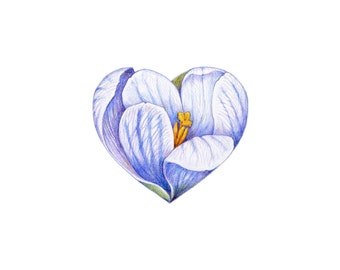 Crocus - Botanical Hearts series  - Archival print of my colored pencil drawing