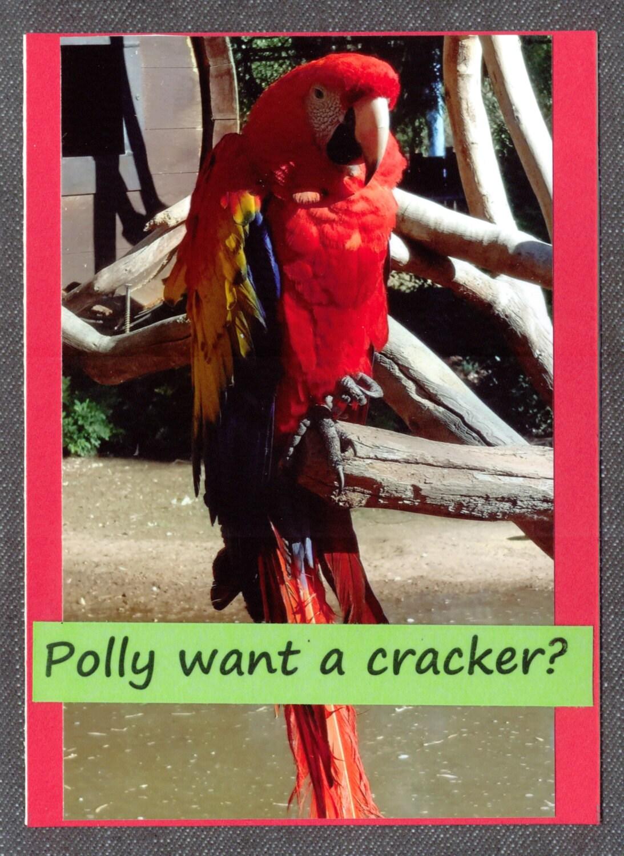 Funny Parrot Birthday Card by RowdyOriginals on Etsy