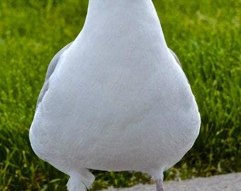 Sea Gull folded greeting cards