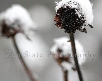 Snow Fall Print. Nature Print. Snowflake Photo. Macro Photography Print. Winter Wall Art. Photo Print, Framed Photo, or Canvas Print.
