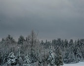 Stormy Winter Scenery Fine Art Photography, Snow covered trees, 5x7 , 8x10
