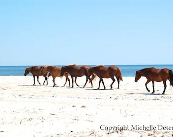 Wild Horsescape - Nature Photography, Horse Photography, Wild Horse Art, Horse Decor, Beach Horses, Assateague Horses, Wild Horse Landscape